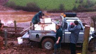People rescuing fish from the field