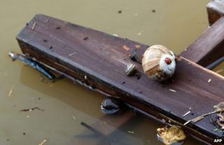 A ladybird sits on a snail on a wooden board in Dresden, 4 June