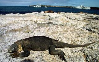 An iguana rests on a rock with tourist boats in the background