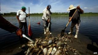 Fisherman collect dead fish piled up in the banks of the lagoon of the Hurtado dam in Acatlan de Juarez, Jalisco state, Mexico on July 1