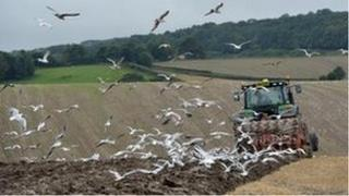 Ploughing a field