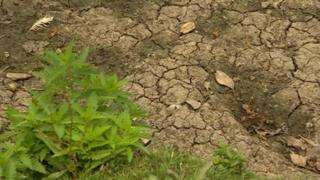 The Whitworth Park lake's clay bed has dried up