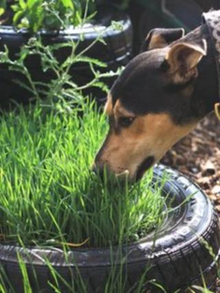 Bath Cats and Dogs Home sensory garden