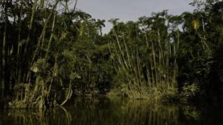 View from a lake in the Ecuadorean Yasuni National Park.