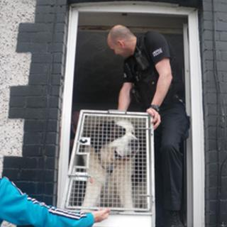 The St Bernard dog is manhandled out of the property in a cage