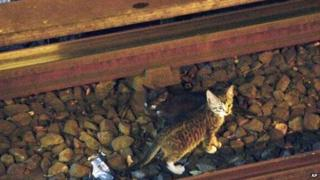Kittens on the subway tracks in Brooklyn, New York