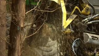 Machine cuts trees down
