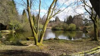 Japanese-style Garden at Cowden in Clackmannanshire