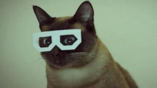 CultureTECH cat