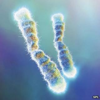 Telomeres cap the end of our chromosomes