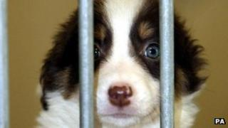 Britain's stray dog population is falling