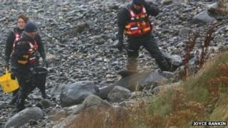 The young whale became stranded near Portballintrae Bay