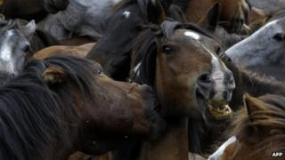 A file photo of wild horses fighting in Sabucedo, Spain in July 2011