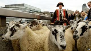 The Master Woolman Col Bill Clarke from the City of London drives sheep from north to south across London Bridge