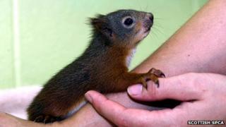 Dizzee squirrel