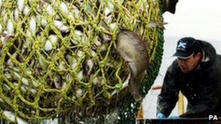 Fish being loaded on to trawler