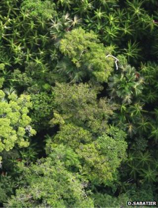 Rainforest canopy (Image: Daniel Sabatier)