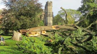 The Tree of Heaven at The Bishop's Palace in Wells was brought down by the storm