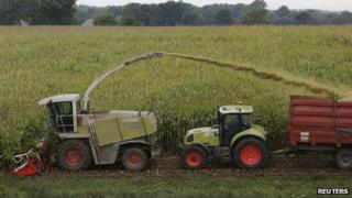 Harvest in French corn field - file pic