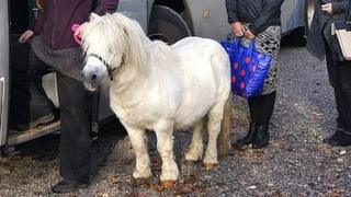Buster the Shetland pony, found abandoned at a bus stop in Bristol