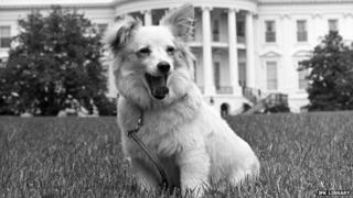 Pushinka on the White House lawn