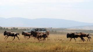 Tourists watch a herd of Wildebeest run through a field during the annual wildebeest migration through the Masai Mara National park in western Kenya - 2008