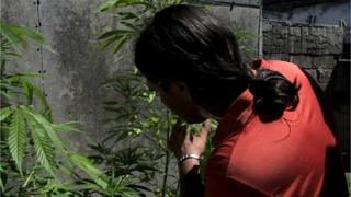 Cristian tends his marijuana plants in his backyard in Montevideo