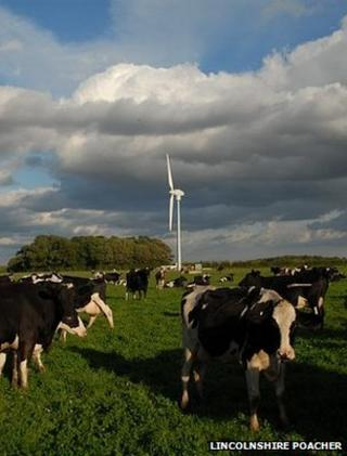 Cows in a field with a turbine (Image: Lincolnshire Poacher)