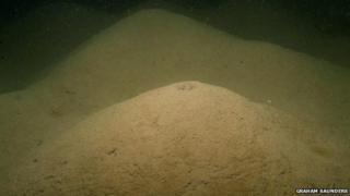 Mud volcano worm mounds