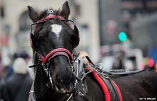 A horse on the streets of New York