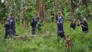 Workers hired by the government destroy coca plants in Colombia in November2010