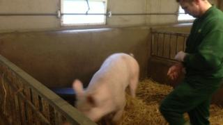Pig and farmer