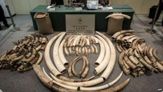 File photo: seized ivory tusks displayed by Hong Kong Customs officials in Hong Kong, 3 October 2013