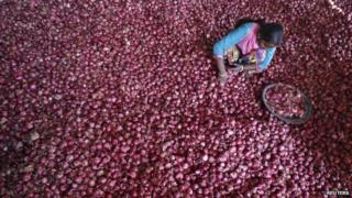 A labourer spreads onions for sorting at a wholesale vegetable market in the northern Indian city of Chandigarh
