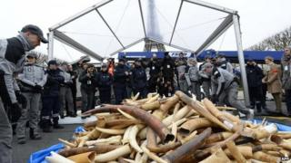 Illegal ivory being destroyed in Paris. Photo: 5 February 2014