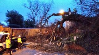 Fallen oak tree, Kenton, Devon, 15 Feb 2014