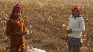 Two children picking cotton
