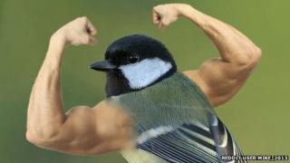 Bird with arms