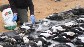Seabirds washed up on the South West coast in February