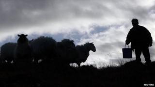 farmer with sheep