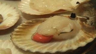 Queenie scallops