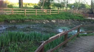 Pond at Bradlaugh Fields reserve