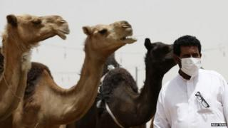 Masked man posing with camels, Saudi Arabia, 11 May 2014