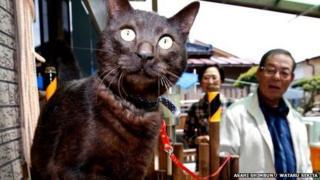 Suika the cat returns home
