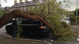 The car with a large tree branch on it