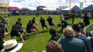 Horse tug of war