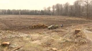 An area of the Forest of Dean cleared by tree feeling