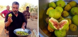 Two photos of figs tweeted by @wheelertweets