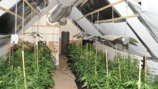 Salford cannabis farm