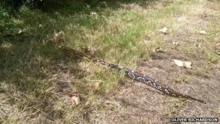 Snake in Plashet Park